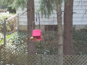 Squirrel on birdfeeder.